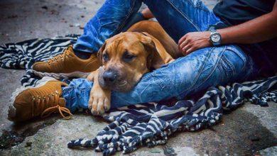 Photo of Почему собаки лучше, чем жены